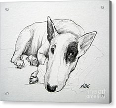 Duke Acrylic Print