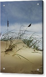 Dune And Beach Grass Acrylic Print
