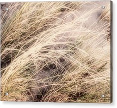 Acrylic Print featuring the photograph Dune Grass Nature Photography by Ann Powell
