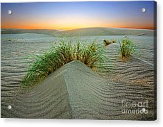 Dune Grass Of Bruneau Idaho Acrylic Print
