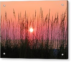 Dune Grass Sunset Acrylic Print by Bill Cannon