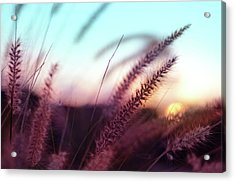 Acrylic Print featuring the photograph Dune Scape by Laura Fasulo