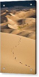 Dunefield Footprints Acrylic Print by Adam Pender