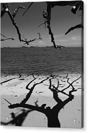 Dunk Island Australia 172 Acrylic Print by Per Lidvall