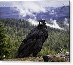 Dunraven Raven Acrylic Print