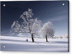 Duo White Acrylic Print by Philippe Sainte-Laudy