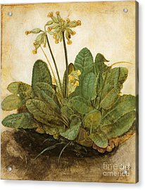 Durer Tuft Of Cowslips Acrylic Print by Granger