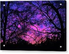 Dusk And Nature Intertwine Acrylic Print