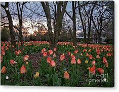 Acrylic Print featuring the photograph Dusk At Sherwood Gardens by Chris Scroggins