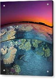 Dusk At The Red Sea Reef Acrylic Print by Henry Jager