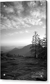 Dusk In Sequoia Acrylic Print