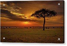 Dusk Over  The Serengeti Acrylic Print