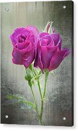 Dusty Roses Acrylic Print