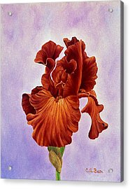 Dutch Chocolate Bearded Iris Acrylic Print