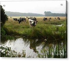 Dutch Cows Acrylic Print