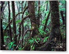 Dwarf Forest Mist El Yunque Acrylic Print by Thomas R Fletcher