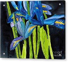 Dwarf Iris Watercolor On Yupo Acrylic Print