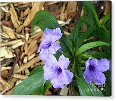 Acrylic Print featuring the photograph Dwarf Mexican Petunias by Terri Mills