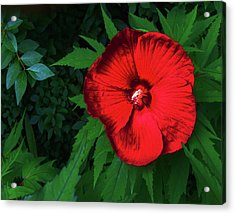 Dynamic Red Acrylic Print