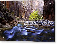 Acrylic Print featuring the photograph Dynamic Zion by Chad Dutson
