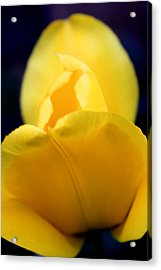 Each Petal Acrylic Print by Mark  France