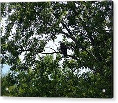 Eagle At Codorus Acrylic Print by Donald C Morgan