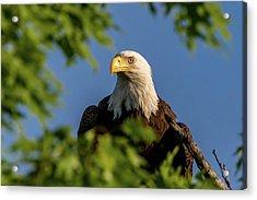 Acrylic Print featuring the photograph Eagle Eye by Allin Sorenson