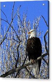 Eagle Eye Acrylic Print by Marta Alfred