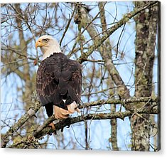 Acrylic Print featuring the photograph Eagle Eye On You  by Debbie Stahre