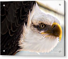 Eagle Eye Acrylic Print by Sherman Perry