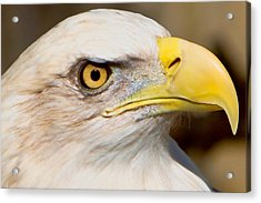 Acrylic Print featuring the photograph Eagle Eye by William Jobes