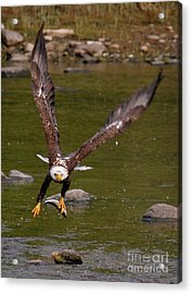 Acrylic Print featuring the photograph Eagle Fying With Fish by Debbie Stahre