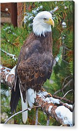 Eagle Glory Acrylic Print