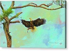 Eagle Grace Acrylic Print by Deborah Benoit