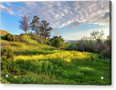 Eagle Grove At Lake Casitas In Ventura County, California Acrylic Print by John A Rodriguez