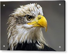 Eagle Acrylic Print by Harry Spitz