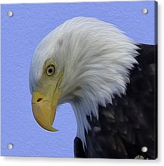 Eagle Head Paint Acrylic Print by Sheldon Bilsker