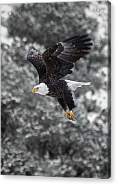 Acrylic Print featuring the photograph Eagle In Flight by Britt Runyon