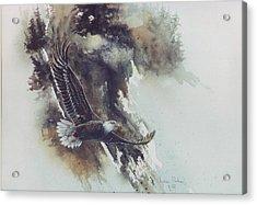 Eagle In Flight Acrylic Print by Lynne Parker