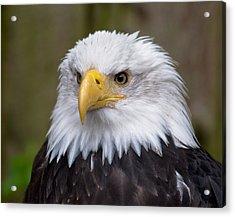 Eagle In Ketchikan Alaska Acrylic Print