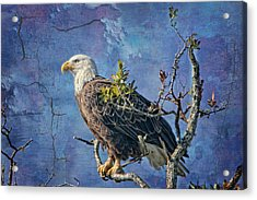 Eagle In The Eye Of The Storm Acrylic Print by Bonnie Barry