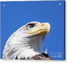 Acrylic Print featuring the photograph Eagle by Jim  Hatch