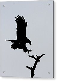 Acrylic Print featuring the photograph Eagle Landing by Phil Stone