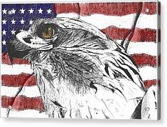 Eagle Acrylic Print by Nathaniel Hoffman