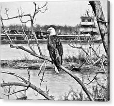 Eagle On The Illinois River Acrylic Print by John Freidenberg