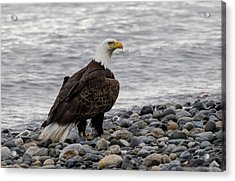 Eagle On The Rocks Acrylic Print