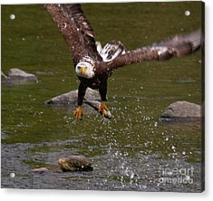 Acrylic Print featuring the photograph Eagle Over Seal Rock by Debbie Stahre