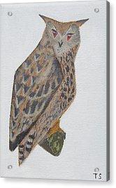 Eagle Owl Acrylic Print by Tamara Savchenko