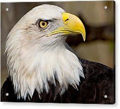 Eagle Power Acrylic Print by William Jobes