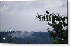 Eagle Powers Acrylic Print by Mari Nelson